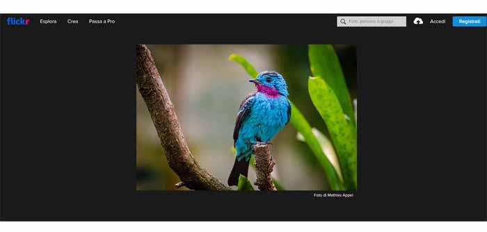 homepage flickr